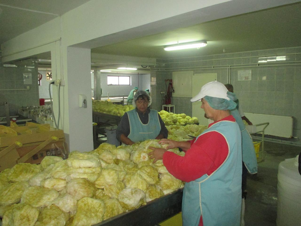 JANJA DOO Proizvodnja voća i povrća Novi Sad